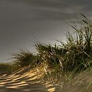 Sun in the Dunes by PhotogeniquE IPA