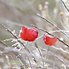 Fading Poppies by whimsicalworks
