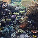 Aquarium- Fishing for Color by T. Victor