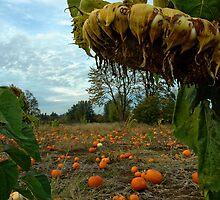 Grandpa's Pumpkin Patch by Nick Boren