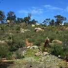 John Forrest National Park III by Catherine Liversidge
