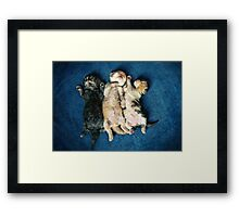 Just being this cute is completely exhausting! Framed Print