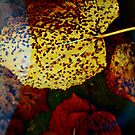 Autumn by Ulf Buschmann