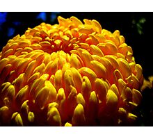 Mellow Yellow Photographic Print