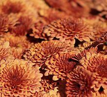Autumn Flowers by Debbie Stika
