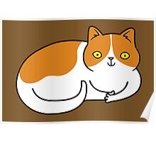 Special Cat... Ginger and White Poster