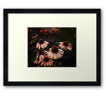Echinacea Flowers - High Line Park - New York City Framed Print