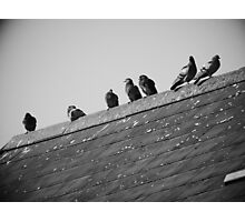 Pigeons on a Roof Photographic Print