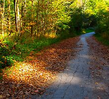 A path of leaves by MarianBendeth