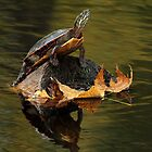 Autumn's Painted Reflection / Painted Turtle by Gary Fairhead