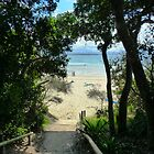 Beaches and Great Oceans Of Australia by Virginia McGowan
