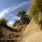 Southend Dunes by Enivea