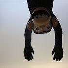 Monkey by creativebubble