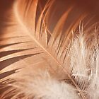 Feather by Kym McLeod