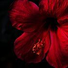 Red by Biren Brahmbhatt