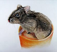 Dwarf Russian Hamster by Timothy Smith
