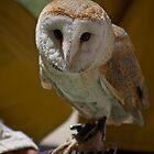 Owl by mariocassar