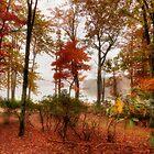 Silent  autumn  by Yelena Rozov