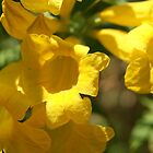 Yellow flowers_3 by Eva  Ason