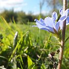 Lavender Field by BioticCrisis