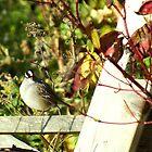Fence Sitter by BioticCrisis