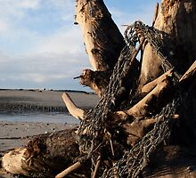 Ephemera #1 (Fishing Net on Tree Stump, Sangan River, Naikoon Park, Haida Gwaii, British Columbia, Canada, November 2009) by Edward A. Lentz