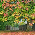 Autumn Colours by Stephen Knowles