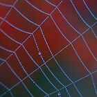 Red Web by Sophie Watson