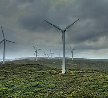 Wind Farm, Albany, Western Australia by Elaine Teague