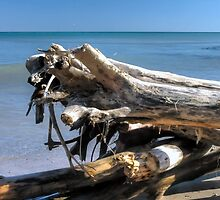 Drift Wood (color) by NVSphoto