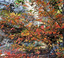 Fall Color by Carolyn  Fletcher