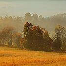 Misty Morn by Gary L   Suddath