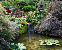 Japanese Garden by Laurel Talabere