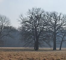 Winter Trees by Friederike Alexander