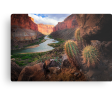 Marble Canyon Cactus Metal Print