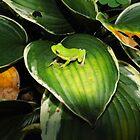 Little Frog In My Garden                   by WildestArt
