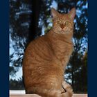 Mrrowr, Marmaduke the Marmalade Cat here!  - iPhone case by Odille Esmonde-Morgan