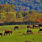 Rescue Horses by Eileen Brymer