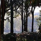 Summer under the Jarrah - C Matthews by Golden Valley Tree Park