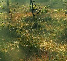 17.10.2011: Morning at the Swamp Forest by Petri Volanen