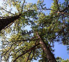 Look Up by Carolyn  Fletcher