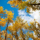 Leaves in the Sky by Curtis Cunningham