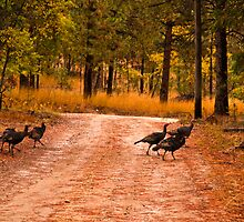 Why did the turkey cross the road? by Bryan D. Spellman
