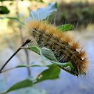 Caterpillar Cradled in a Leaf by the Creek by Barberelli