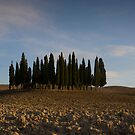 pencil pines near pienza by Matt Bishop