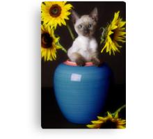Sunflower Scratch Canvas Print