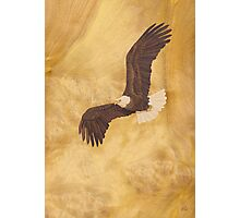 Bald Eagle - Wood Art Photographic Print