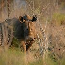 White Rhino by naturalnomad