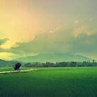 Paddy Land by Nisabutterberry