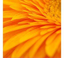 Perfect Petals Photographic Print